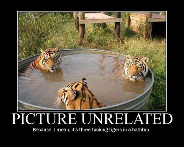 Zdroj http://cdn.randomfunnypicture.com/