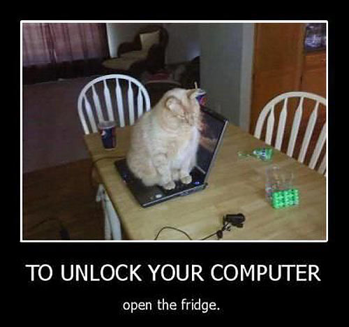 funny-cat-computer-table-jerk